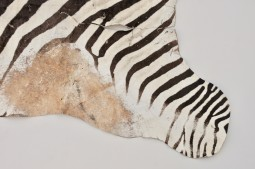 Authentic African Zebra Skin Rug, Taxidermy